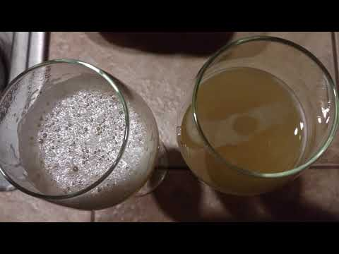 Fizzy Glasses of Homemade Kombucha