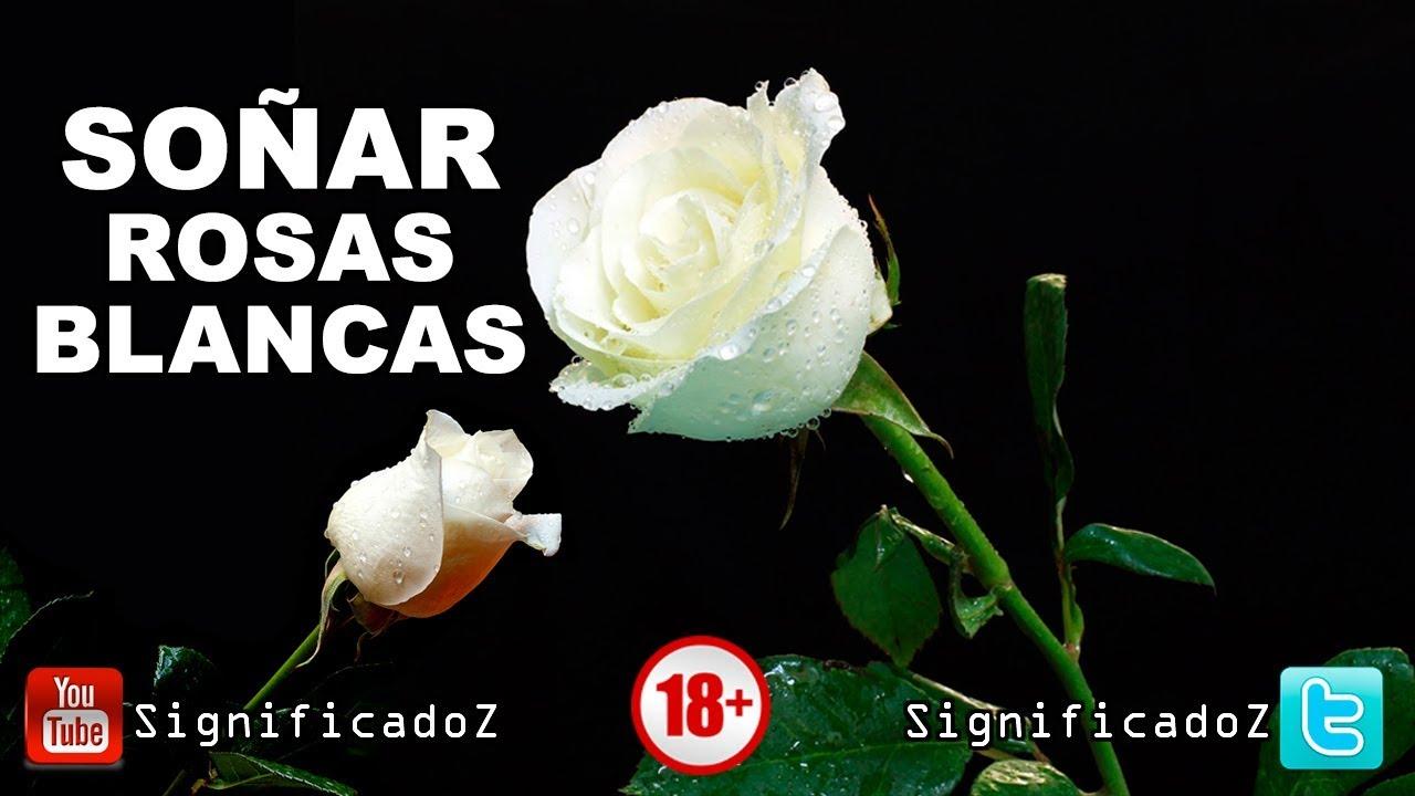 Significado De Soñar Con Rosas Blancas Que Significa Youtube