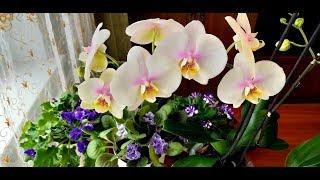 Комнатные цветы в мае.Орхидеи , фиалки  и другие