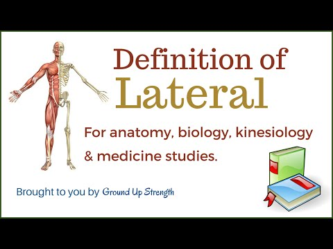 Lateral Definition (Anatomy, Kinesiology, Medicine)