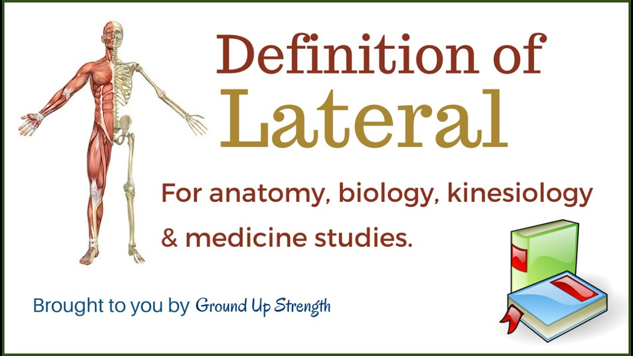 Lateral Definition (Anatomy, Kinesiology, Medicine) - YouTube