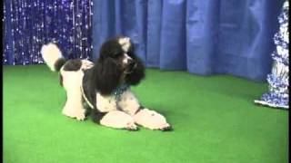 "Dog Dancing: Jyah And Sydney's ""dance"""