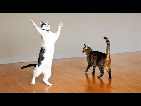 Kitties Dance with Ceiling Fan
