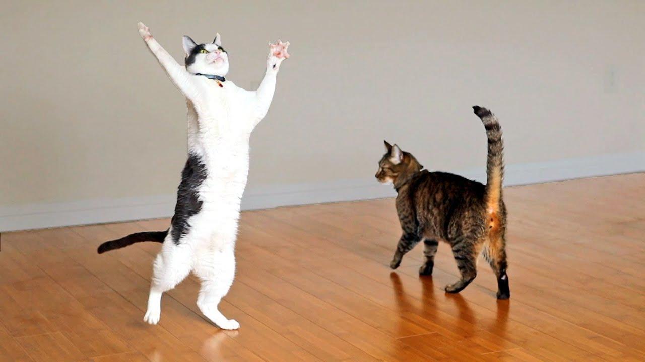 best natural cat flea repellent