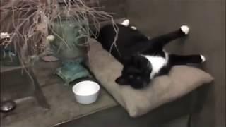 Слепая кошка и 3 спасенных котят.