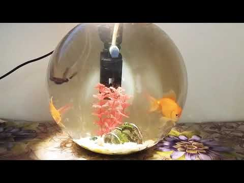 My Gold fish bowl with SOBO WP850 power filter