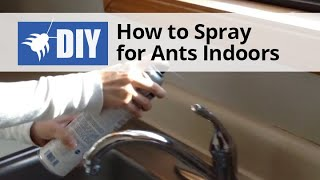 How to Spray for Ants Indoors