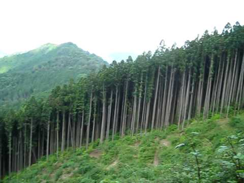 Koyasan Forest in Wakayama Prefecture