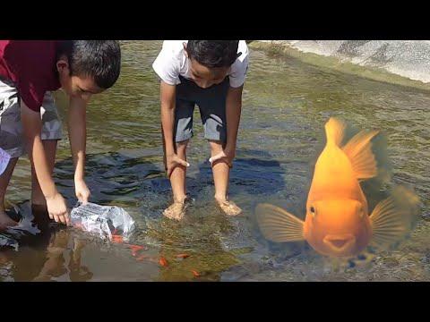 FROM AQUARIUM PRISON TO FREEDOM/HAPPY FISH