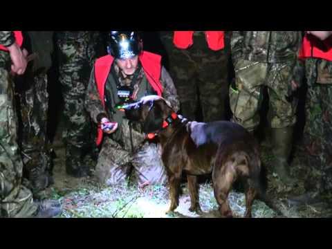 ACCSQ Chiens de sang au service des chasseurs