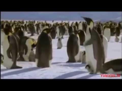 Nice Little Penguins -  I Am Flying