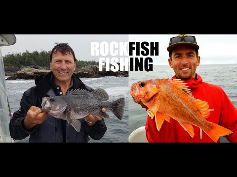 How To Catch Rockfish Fishing Ucluelet BC Black Rockfish