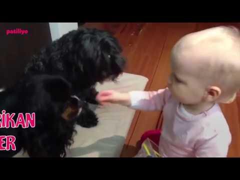 Çocuklarla En İyi Anlaşan 6 Köpek Türü