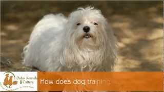 Dog Training Dubai: Your Best Friend When It Comes To Proper Pet Training