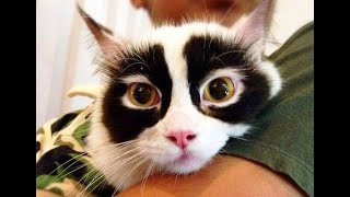 Najbardziej niezwykłe koty na świecie