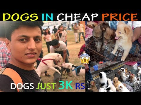 CHEAP DOGS MARKET | WHOLESALE, RETAIL | DOGS IN CHEAP PRICE WITH PHONE NUMBER