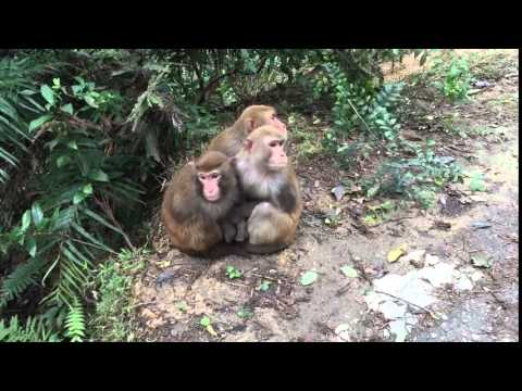 Three little monkeys huddle together in the cold
