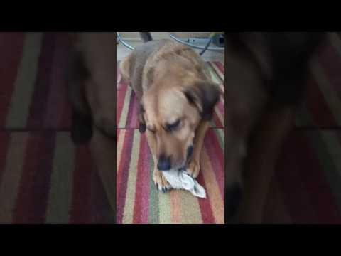 Smart dog!