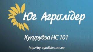 Описание гибрида кукурузы НС 101