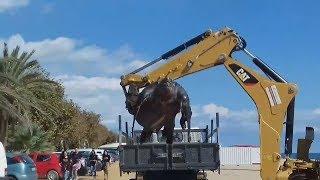 Tortuga gigante de 700 kilos en playa española 2017