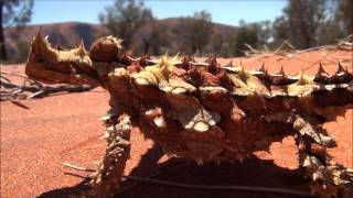 Thorny Devil Dragon