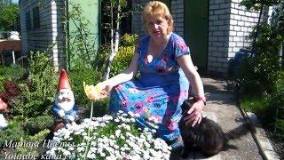 видео Почвопокровные розы и методика их выращивания