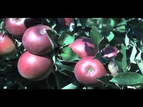 Apple Rust