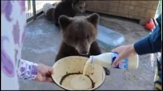 Спасатели МЧС пришли навестить медвежонка Потапа в барнаульском зоопарке