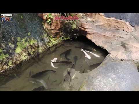 giant-aquarium-tour-vehicle-at-purbayasa-purbalingga-|-seaworld-mini-purbalingga-|-part-1