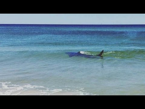 Coastalwatch Live Shark Discussion