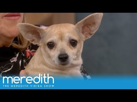 new-year,-new-you,-new-pet!-|-the-meredith-vieira-show