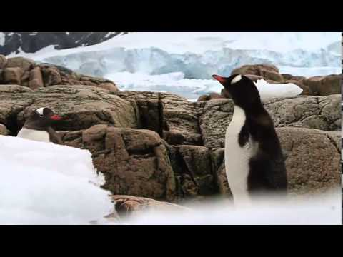Students on Ice Antarctic 2014: The Beauty of Antarctica
