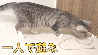 cute cat playing with the string