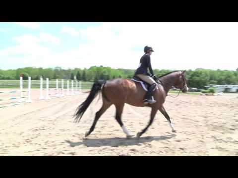 Childrens/Adult Hunter and Equitation Horse for Sale, Newbury Ohio