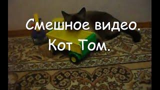 Смешное видео. Кот Том.