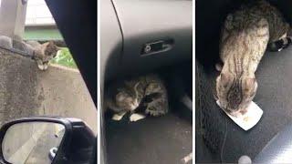 「おい、なんでこんなところに猫がいるんだ?」NYの市議会議員が高速道路で子猫をレスキュー