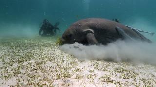 Dugong Diving near Coron, Philippines