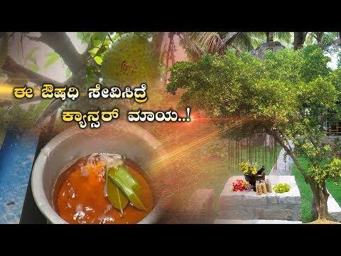 Powerful Medicine for Cancer Treatment – Hanuma Phala / Soursop Tree