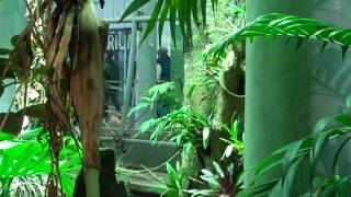 Selva Tropical Artificial Tropical Rainforest San Francisco.MP4