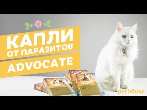 Обзор препаратов для кошек от глистов — Кот Обормот