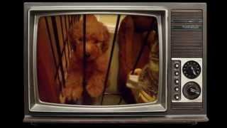 モコ君の仔犬の頃の映像です。 最初の動画はモコ君が我家に来てすぐの頃...