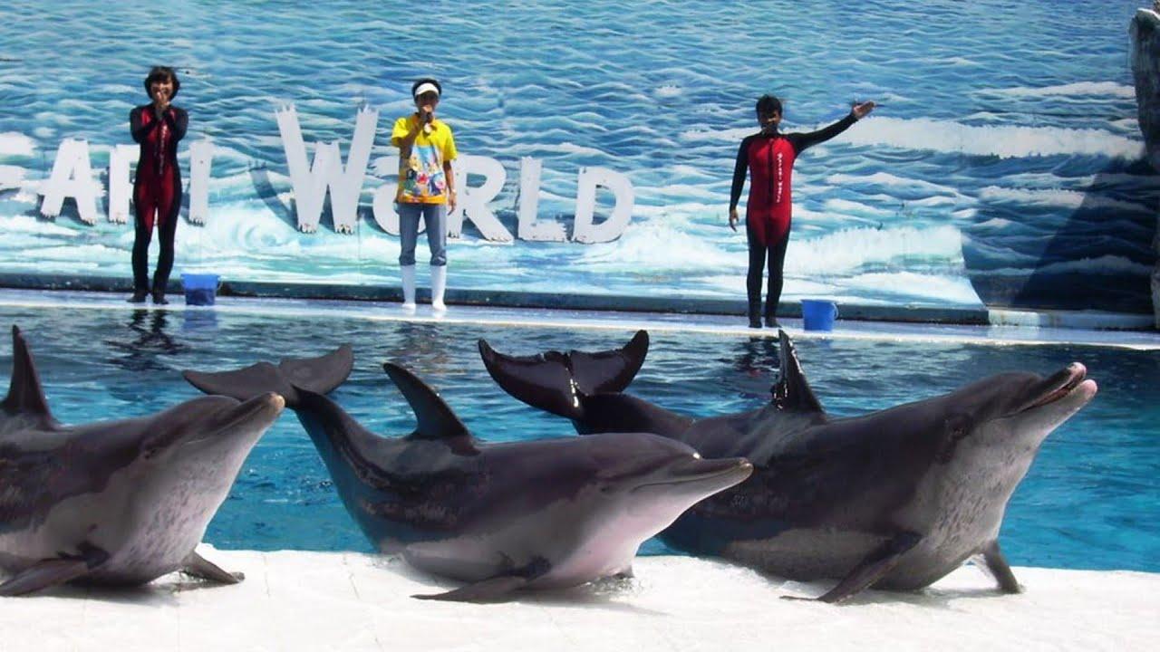 Delphin Show