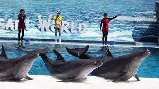 Dolphin show,  Safari World, Bangkok, Full HD