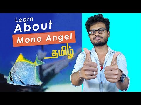 How To Care Mono Angel Fish Or Sea Angel Fish ( Review In Tamil )