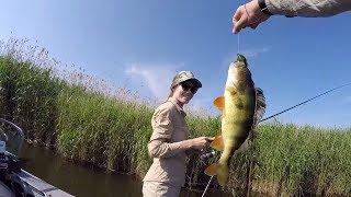 Ловля окуня! Рибалка з дружиною! Копчення Риби