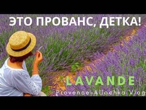 ЛАВАНДОВЫЕ ПОЛЯ/МИСТИКА/ЭТО ПРОВАНС, ДЕТКА/LAVANDER