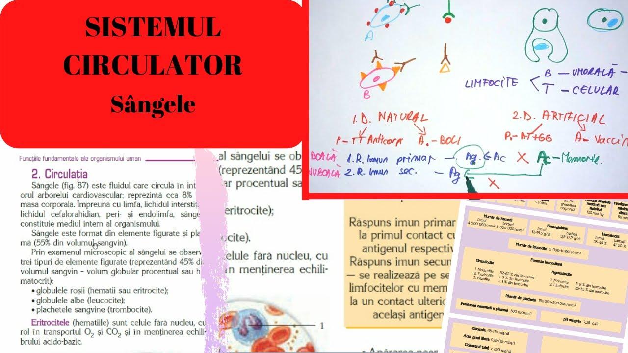 Sistemul circulator al viermei. Sistemul circulator al viermei