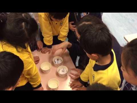 STEM到校課程上課情況 - 科學實驗班 - YouTube