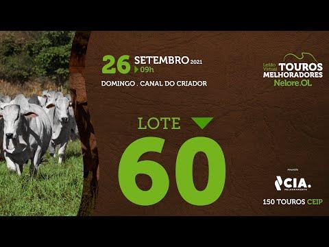 LOTE 60 - LEILÃO VIRTUAL DE TOUROS 2021 NELORE OL - CEIP