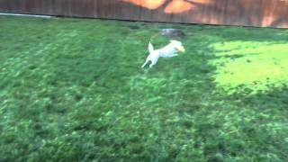 Playin in the yard